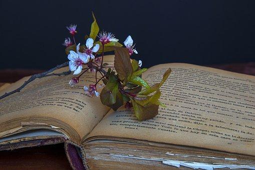 Livres Anciens, Livre, Livres, Vieux