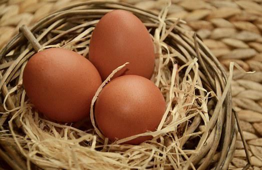 Egg, Brown Eggs, Of Course, Nest