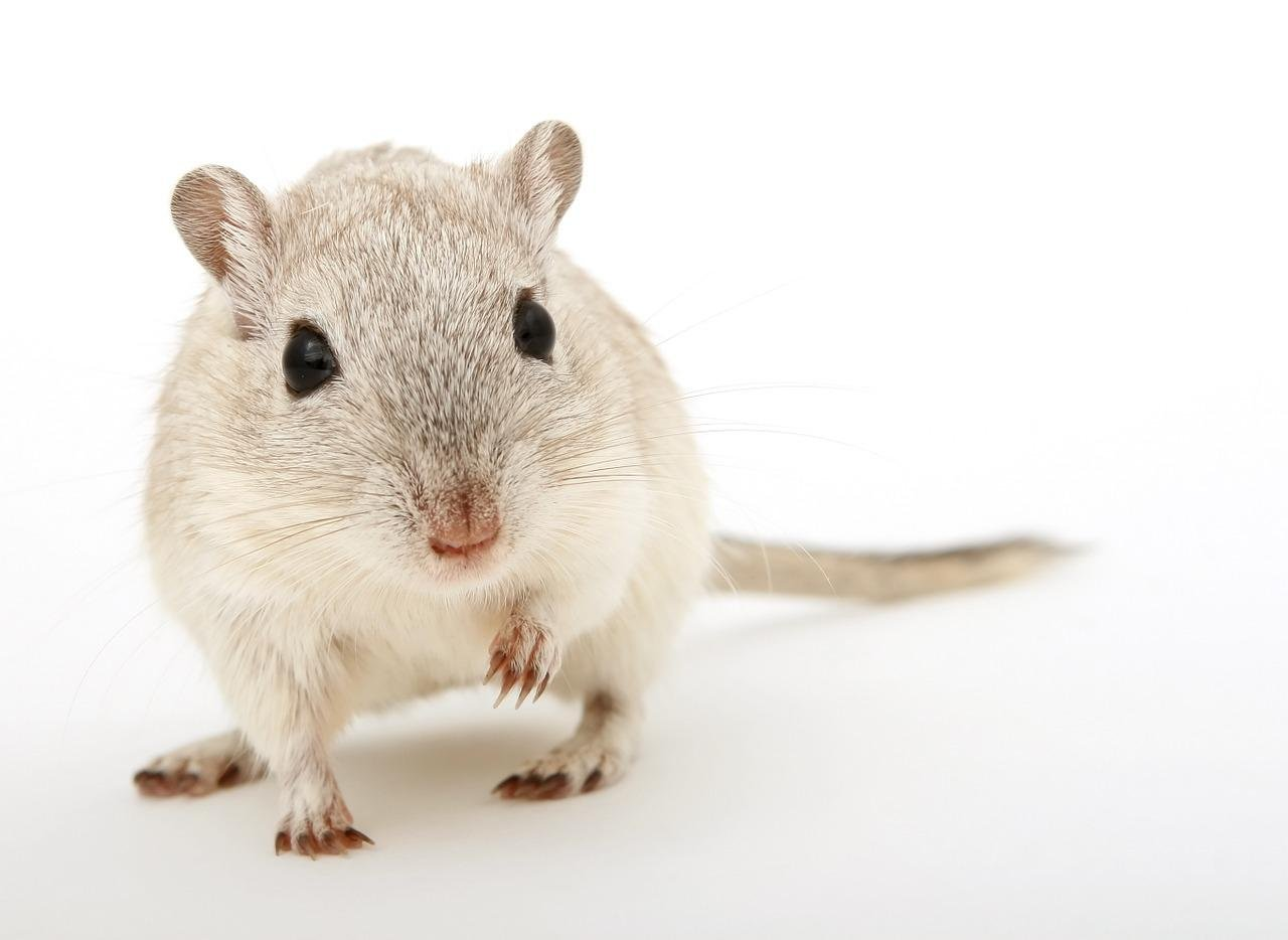 The Average erection contains enough blood to keep three gerbils alive.