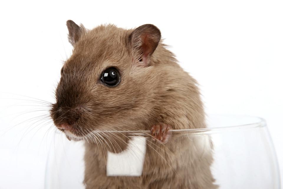 hamster hårete Melissa dukke blowjob