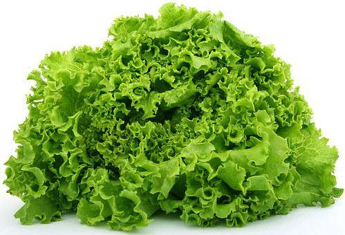 Lettuce, Food, Fresh, Green, Healthy
