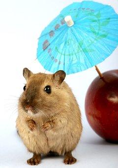 Animal, Apple, Attractive, Beautiful