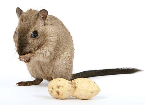 14 Fragen und Antworten zum Corona-Virus - Hamster