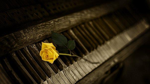 Piano, Rose, Yellow, Vintage, Keys