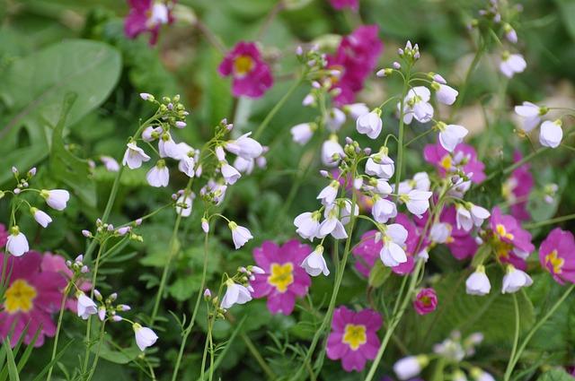 Foto gratis flores flores silvestres campo imagen - Tipos de flores silvestres ...