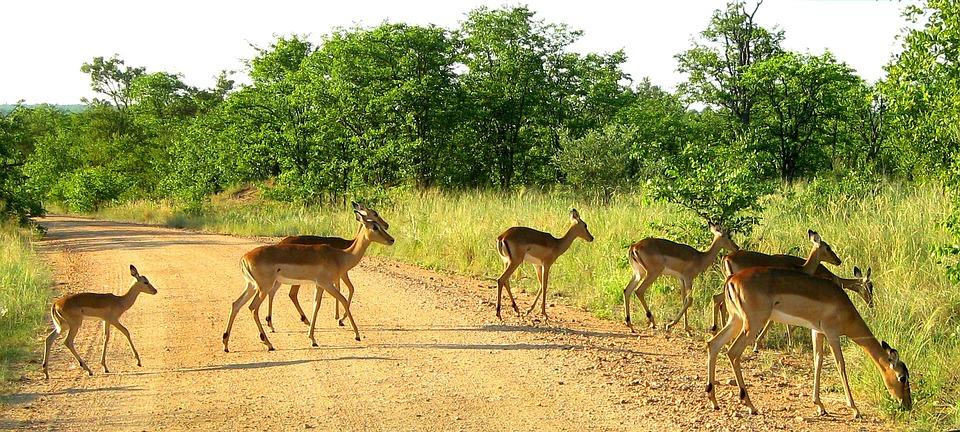 Kruger National Park South Africa 183 Free Photo On Pixabay