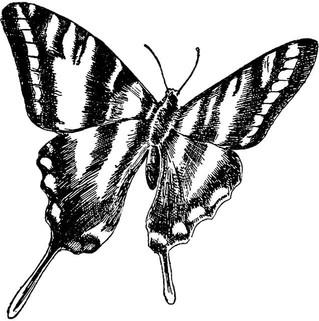 Like tell butterfly illustration public domain