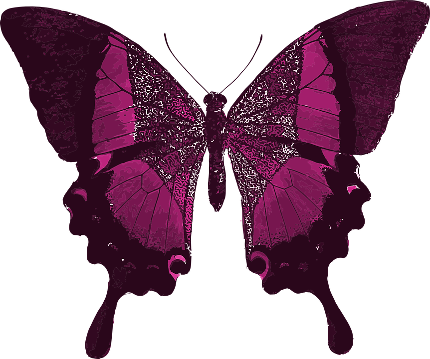 Super Illustration gratuite: Rose, Papillon, Coloré, Beau - Image  UT28