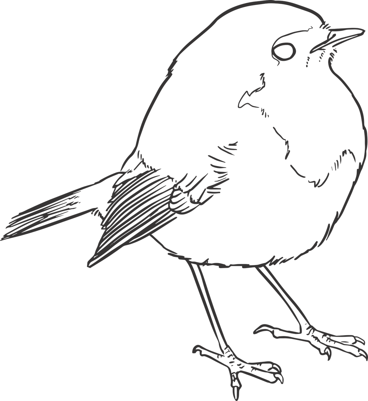 Bird Lineart Lines Free Vector Graphic On Pixabay