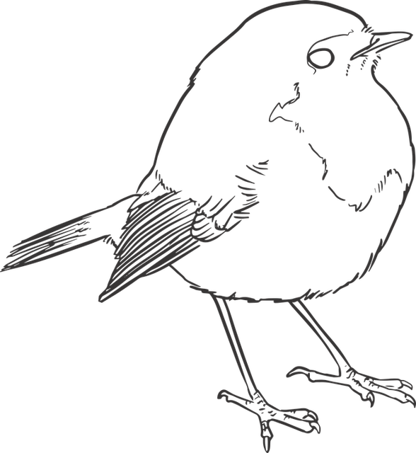Vector Drawing Lines Game : Free vector graphic bird lineart lines drawing