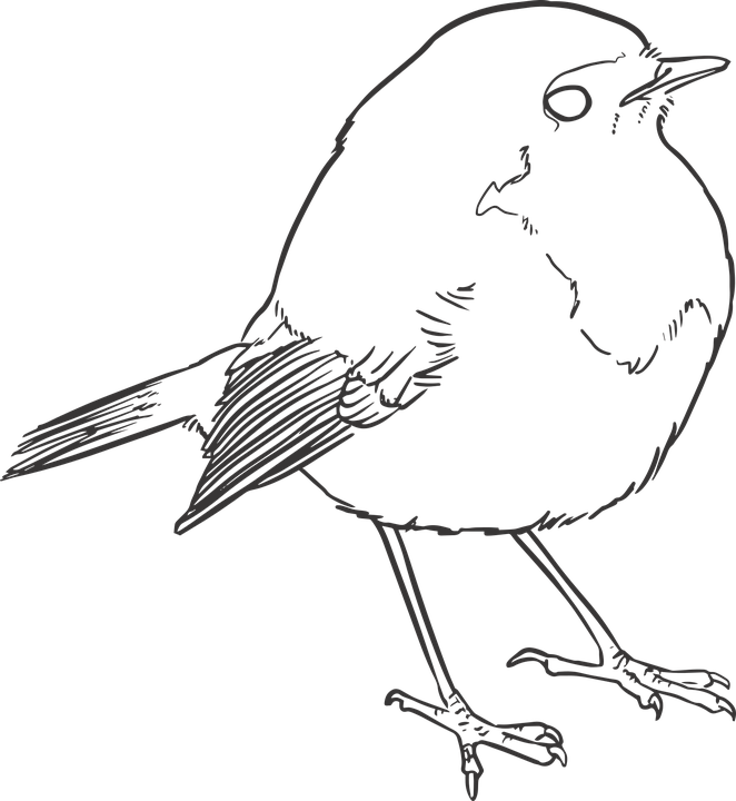 Simple Bird Line Art : Bird lineart lines · free vector graphic on pixabay