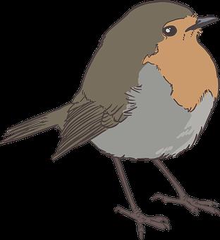 Bird Sparrow Feather Nature Animal Color D