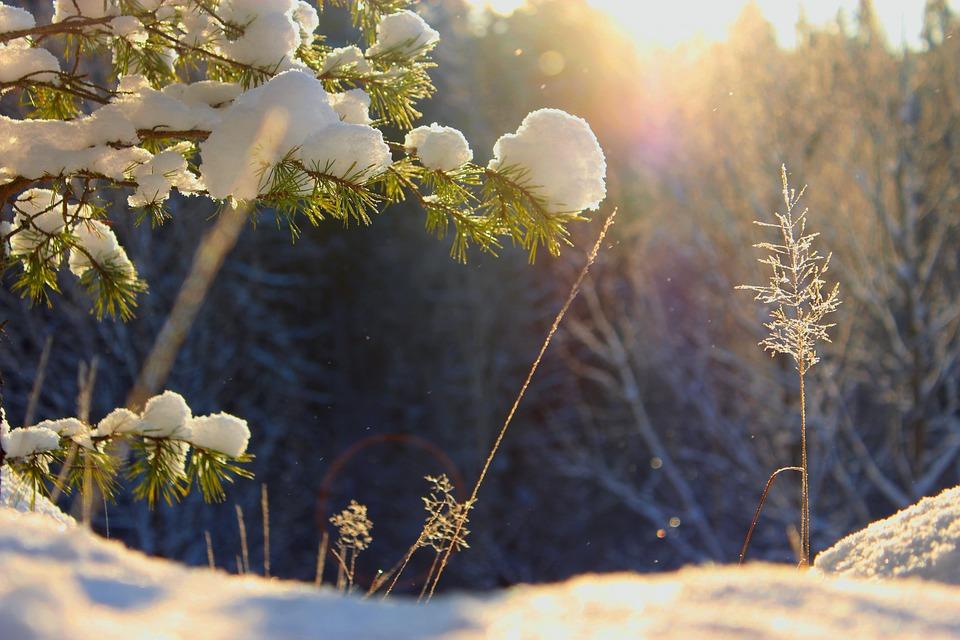 Lumi Laukut Suomi : Ilmaisen valokuvan talvi aurinko luonto suomi