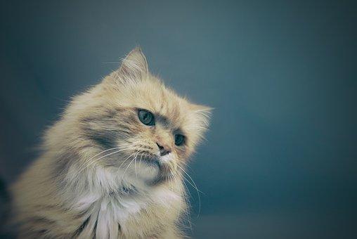 Katze, Katzen, Tier, Haustier, Häuslich