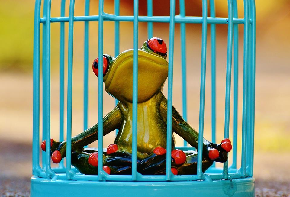 Risultati immagini per cattura rane