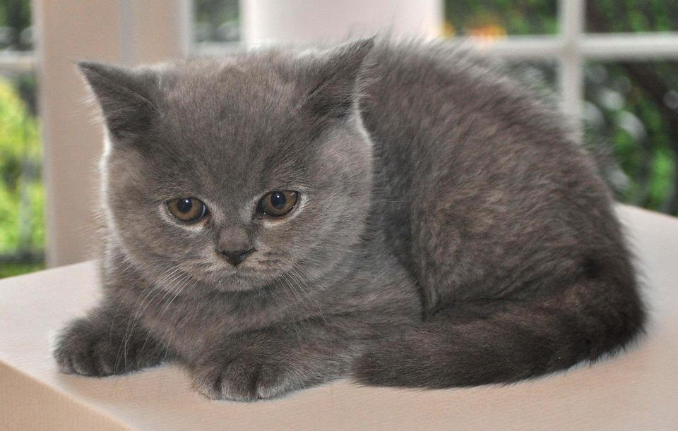 bringing an outdoor cat indoors