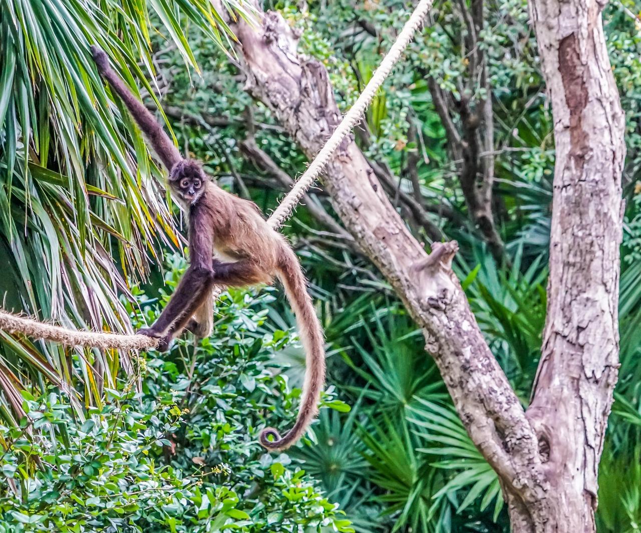 обезьянки в джунглях картинка вот