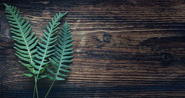 シダ, 植物, 自然, シダ植物, 葉, 緑, 木, テキストの自由|アインの集客マーケティングブログ