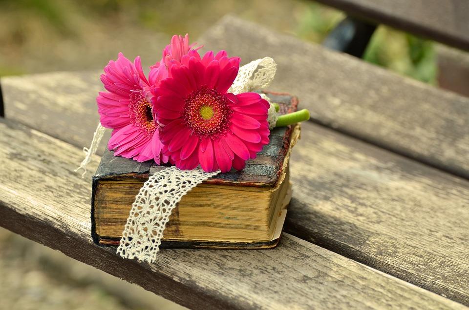Gerbera Rose Fleur Photo Gratuite Sur Pixabay
