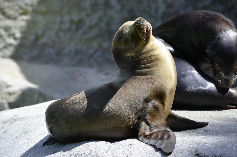 Robbe Seal Baby Zoo Free Photo On Pixabay