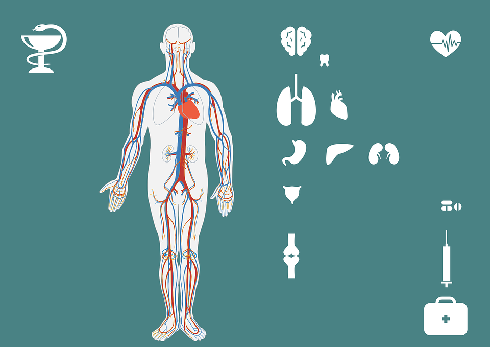 Medis Set Ikon Tubuh - Gambar vektor gratis di Pixabay