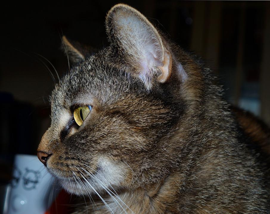 fotky z peknej mačička ako máte Gay Sex