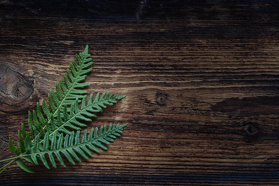 Fern, Small Fern, Green, Plant, Wood, Brown