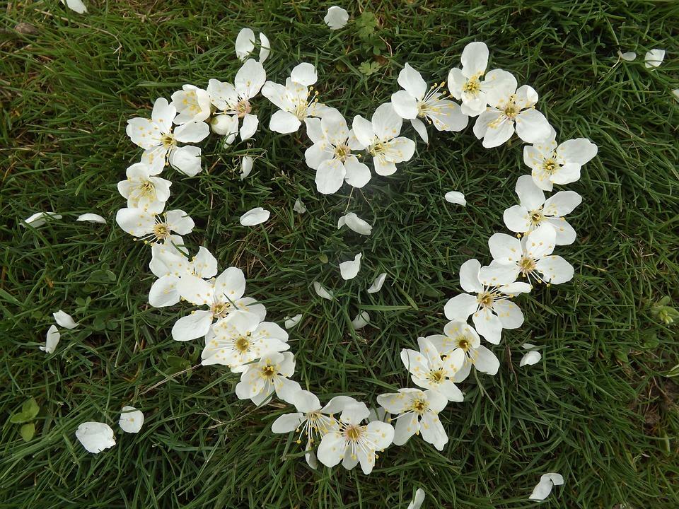 Frühling Herz