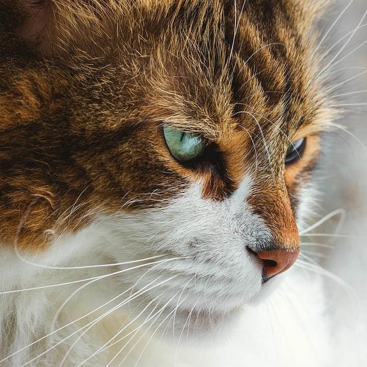 Download 68+  Gambar Kucing Lucu Pixabay Paling Baru Gratis