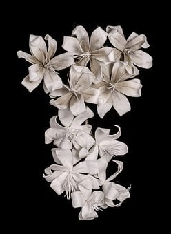 White Lily Images Pixabay Download Free Pictures