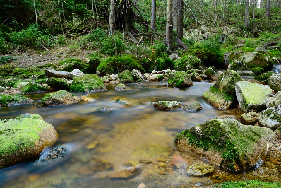 Brook, Forest, Tree, The Brook, Landscape, Nature