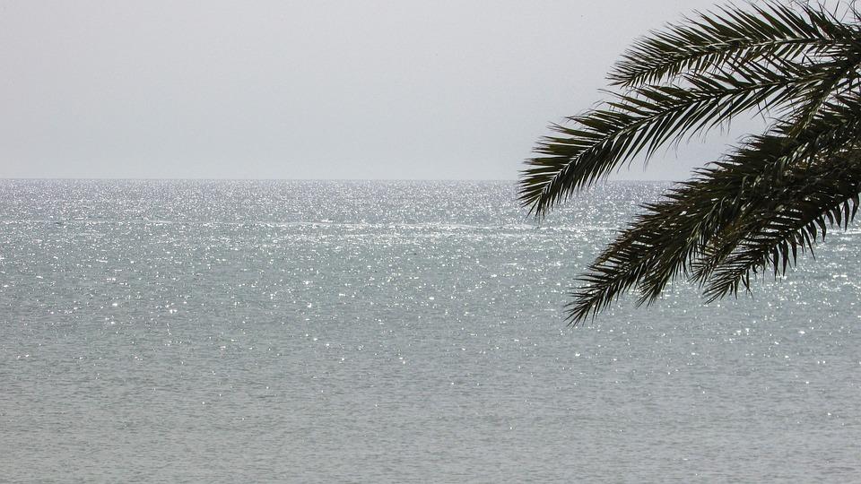 Cyprus, Dhekelia, Morning, Sunlight, Palm, Light