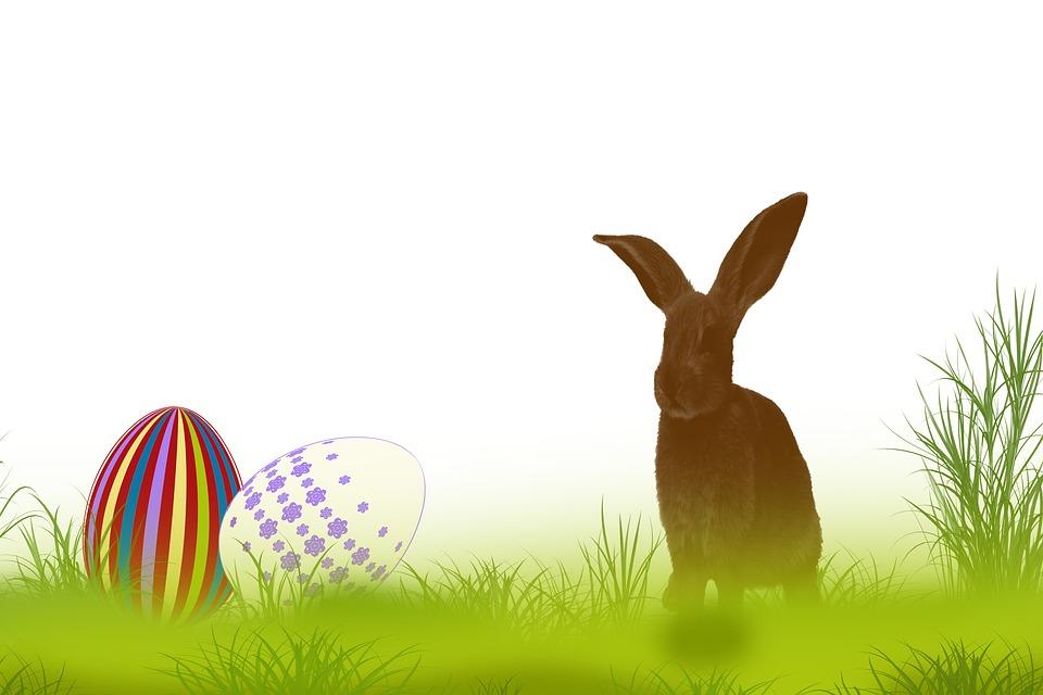 free illustration  rabbit  grass  spring  easter - free image on pixabay
