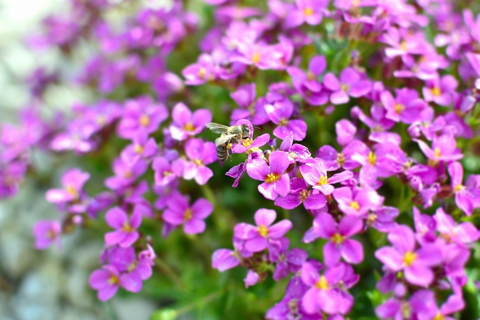 Wallpaper The Background Garden Bee Nectar Violet