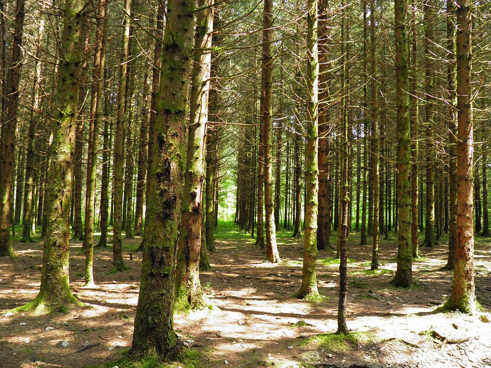 Skog Traer Jura Gratis Foto Pa Pixabay