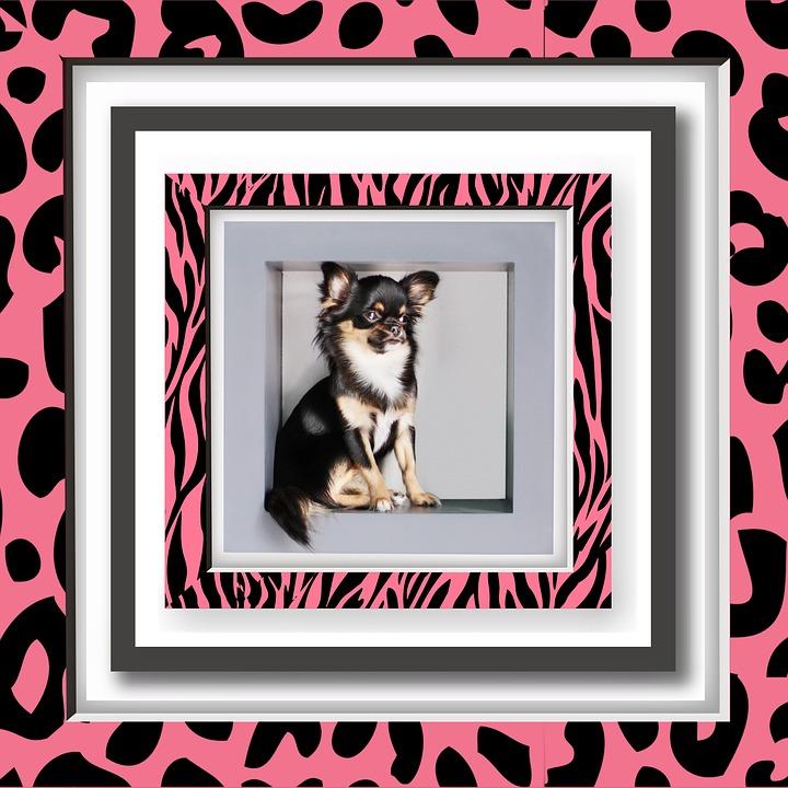 Bilderrahmen Hund Niedlich · Kostenloses Bild auf Pixabay