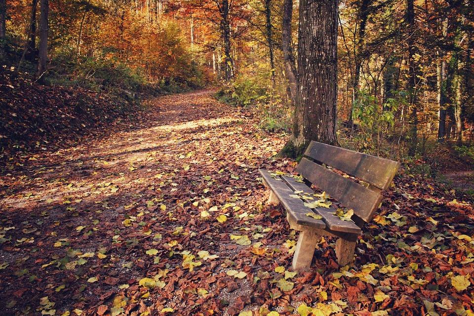 Free Photo Park Park Bench Leaves Leaf Free Image On