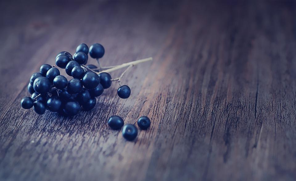 Ligustro, Frutti Di Bosco, Blu Scuro
