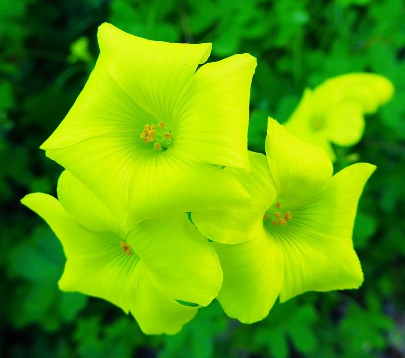 photo gratuite fleur jaune fleurs jaunes image gratuite sur pixabay 1263603. Black Bedroom Furniture Sets. Home Design Ideas