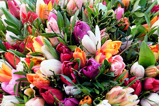 Photo gratuite tulipes bouquet de tulipes fleurs for Bouquet de fleurs printemps