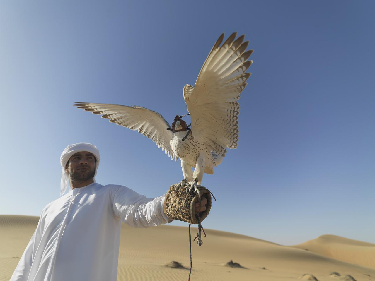 """Some US airports use falconry (hunting of game with falcons) """"to scare off birds that can be hazardous for airplanes."""""""