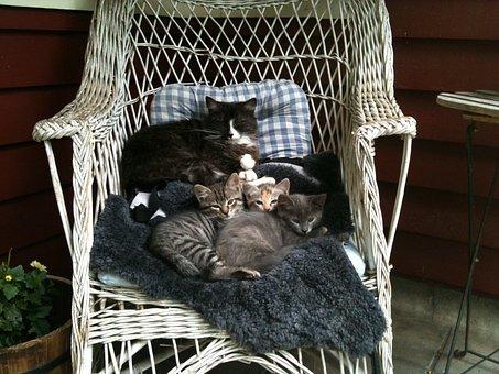 Cat Mom, Kittens, Cats, Family, Pets