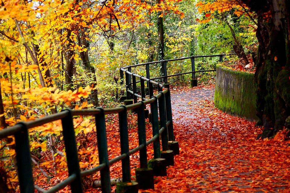 Free photo nature fall autumn outdoors free image on pixabay nature fall autumn outdoors leaves leaf road voltagebd Images