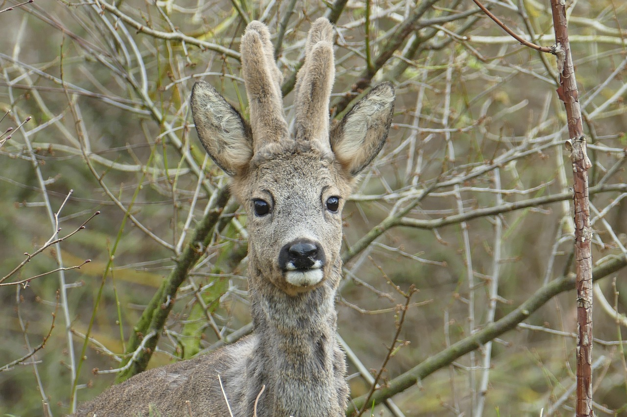 этих фотографии всех лесных животных такие деньги
