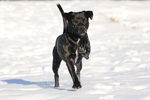 Dog, Patterdale Terrier, Terrier, Black
