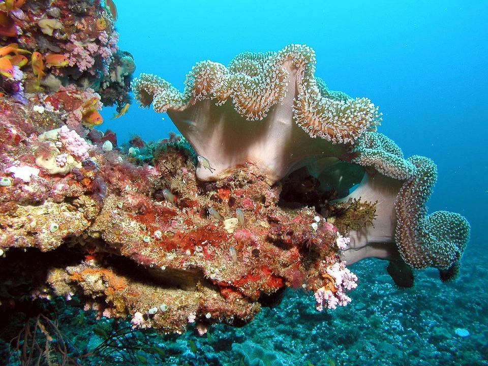 Maldives-underwater-reef