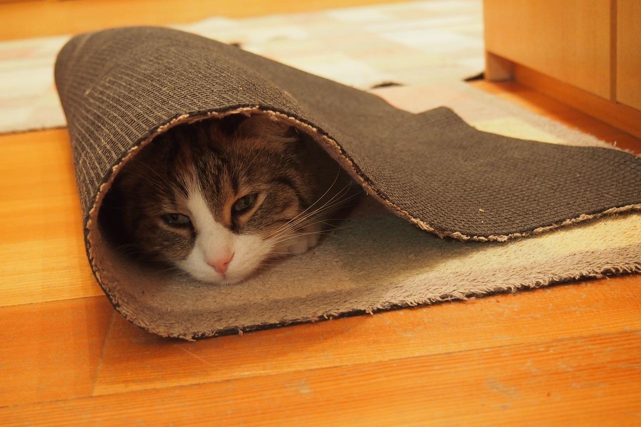 black cat carpet cleaning