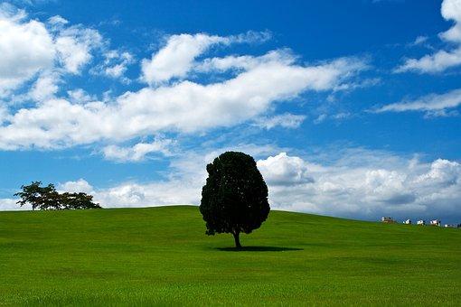 木, 草原, 野生, 自然, 草, 夏, 空, に散在の雲, 一本, 孤独感