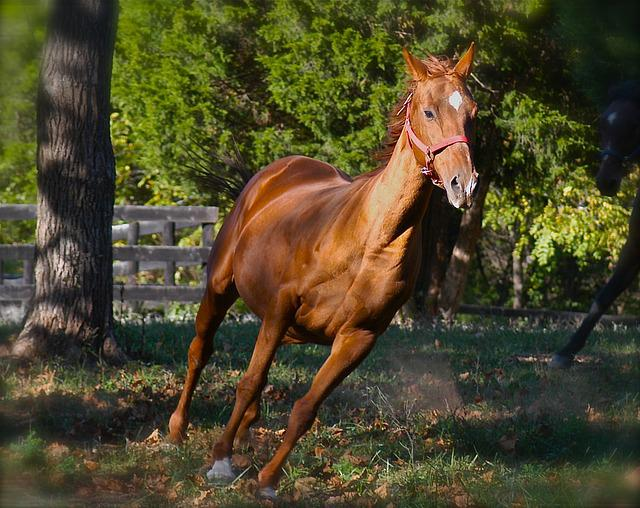 animals horse running free - photo #14