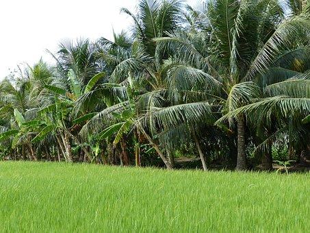 Agriculture, Tropics, Tropical, Nature